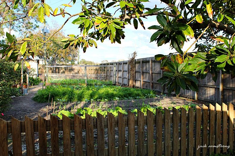 the kitchen garden is coming along nicely with images tampa florida living history museum on kitchen garden id=87088