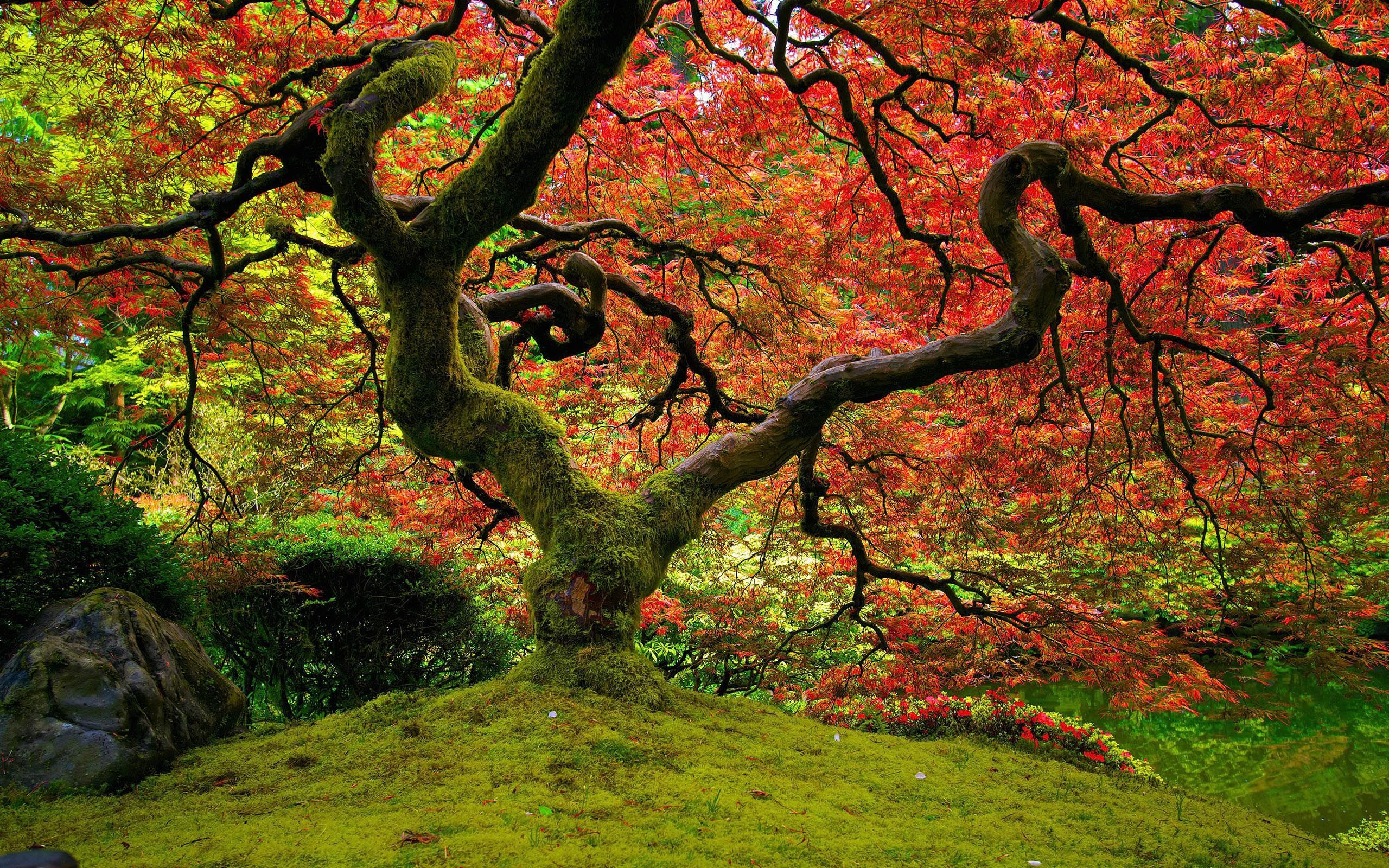 Cherry Blossom Trees in Japan | 8 Jaw-Dropping Trees ... |Beautiful Japanese Trees