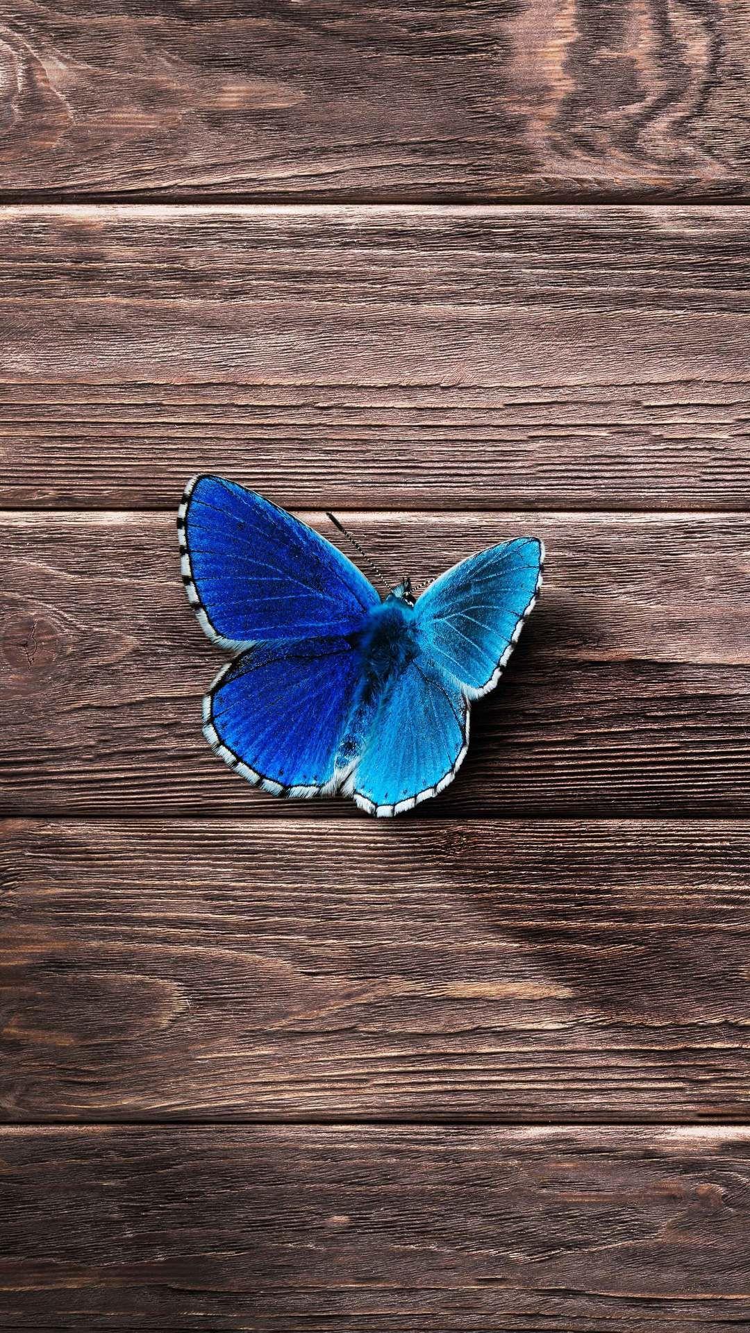 اجمل خلفيات ايفون 7 عالية الدقة 2018 Iphone 7 Hd Wallpapers Tecnologis Butterfly Wallpaper Butterfly Wallpaper Iphone Butterfly Pictures