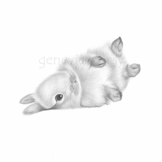 Title Rolling Baby Bunny Artist Genevieve Desy Medium Archival Print Of A Color Pencil Drawing Dimensions 5 X Inches Or 8