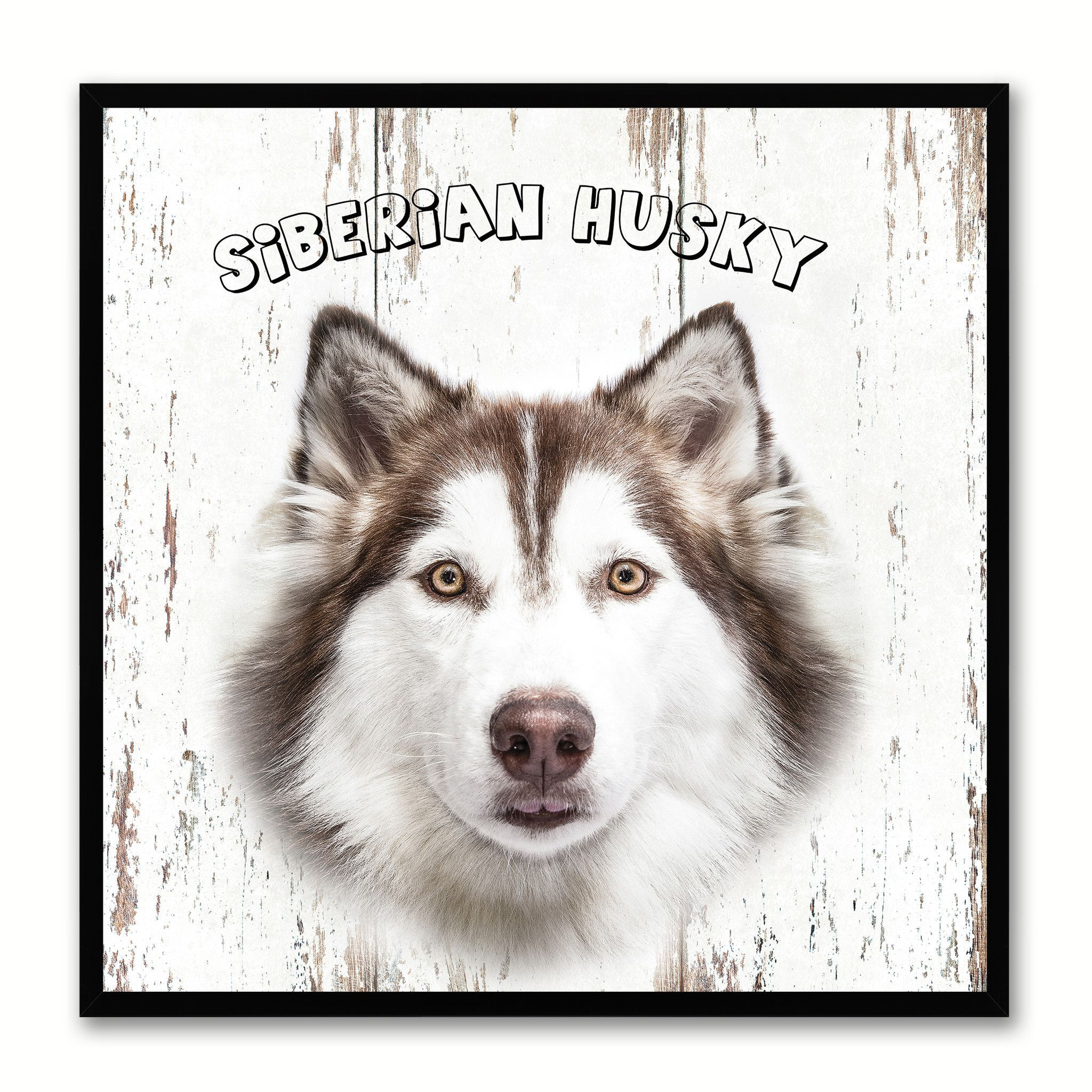 Siberian Husky Dog Canvas Print Picture Frame Gift Home Decor Wall