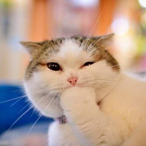 Cute Dp Whatsapp Dp Follow Us Coolwhatsappstatus Kittens Cutest Cute Animals Cute Animal Videos