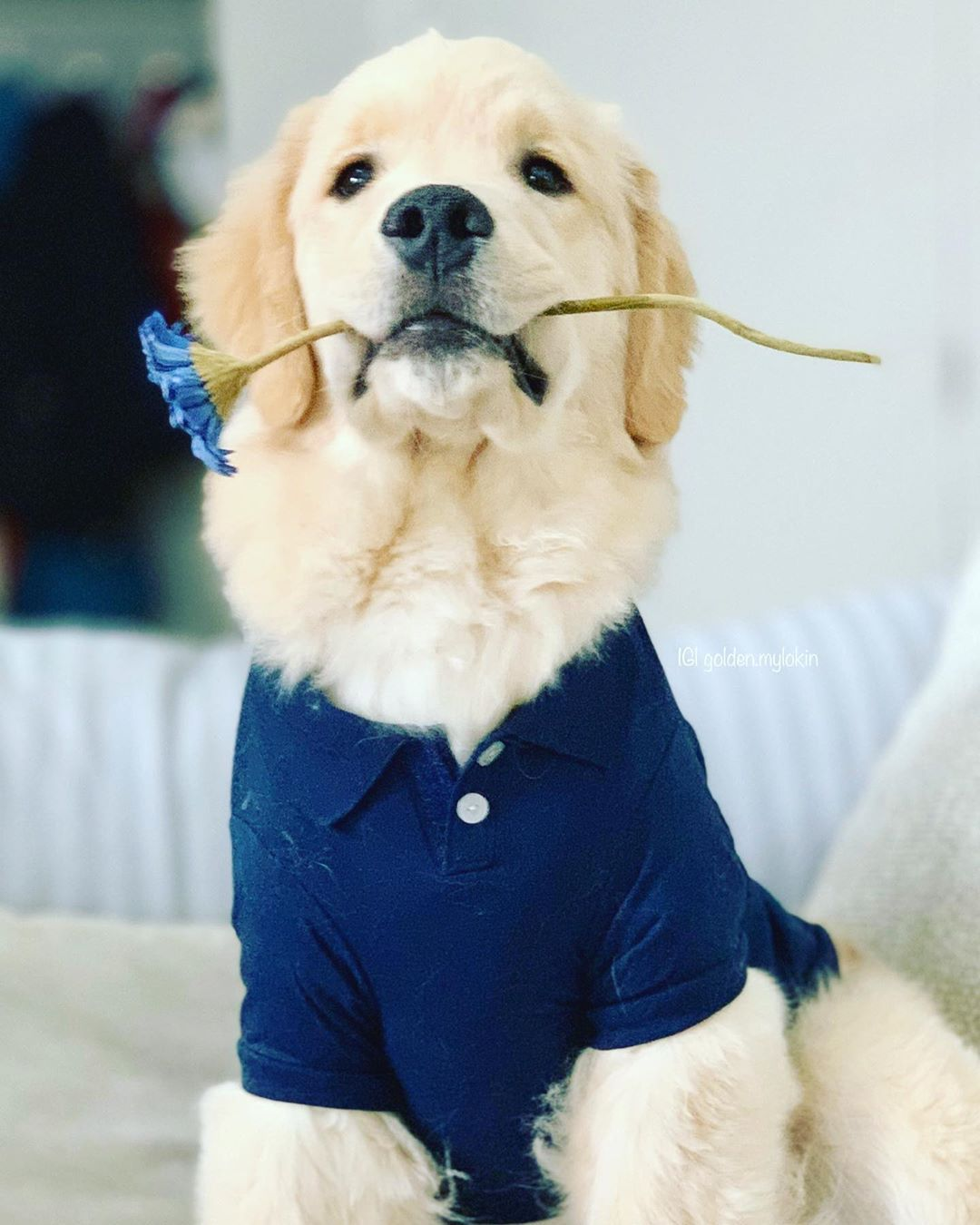 Pin By Samantha Helzer On Golden Retrievers In 2020 Modern Dog Toys Best Dog Toys Outdoor Dog Toys