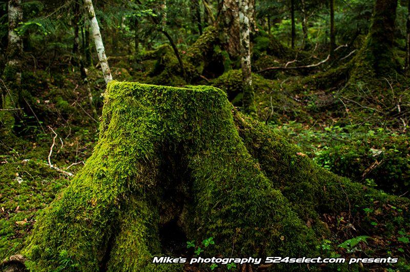 苔の森と原生林 http://524select.com/archives/4463