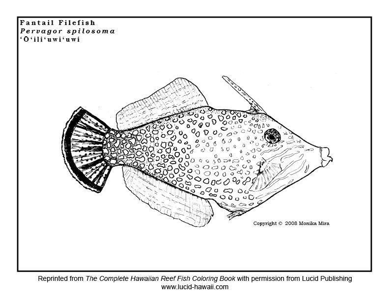 Free Reef Fish Coloring Sheets With Tips For Protecting Coral Reefs Great Earth Day