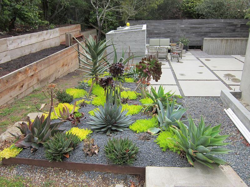 minimalist cactus landscaping idea - page 2