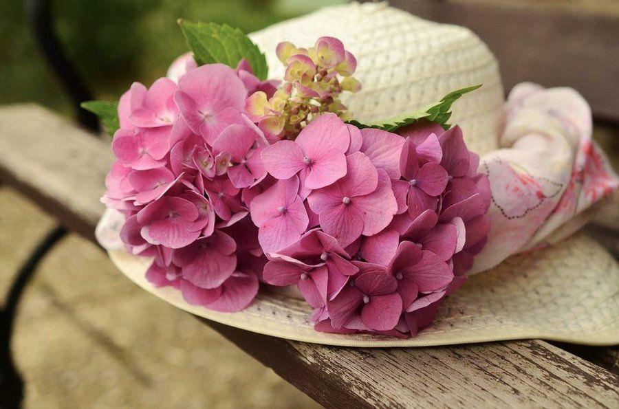 todo sobre el cuidado de las hortensias