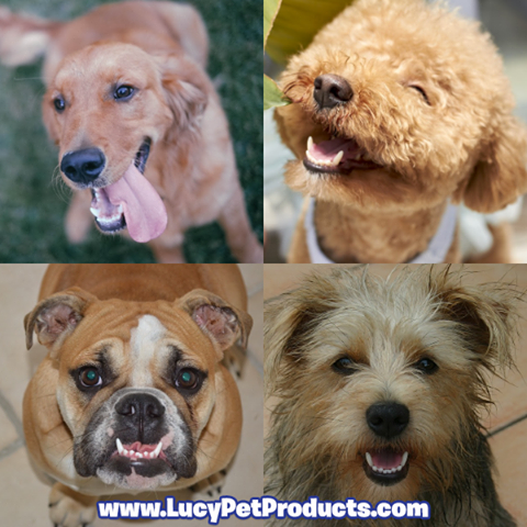 February is National Pet Dental Health Month! How often do