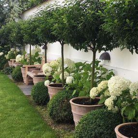 Photo of 35 Simple DIY Backyard Landscaping on a Budget – Garden Design