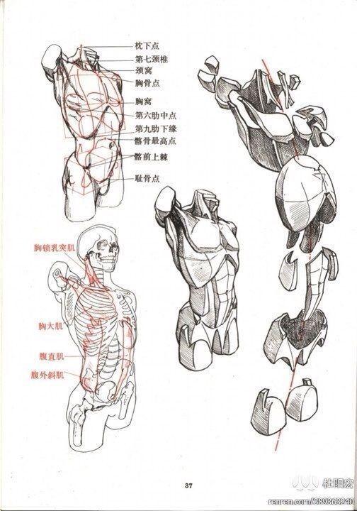 Flesh Figure Sketch