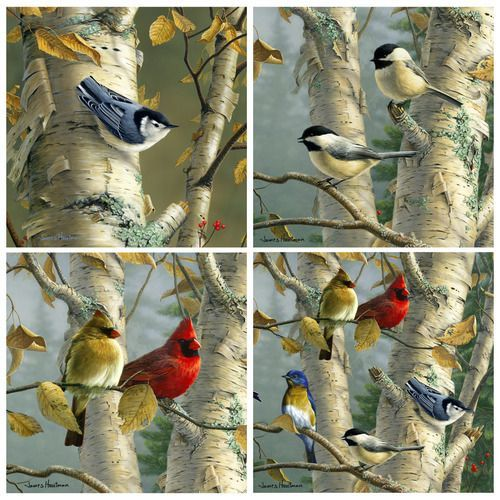 Birch Birds Coaster Set More