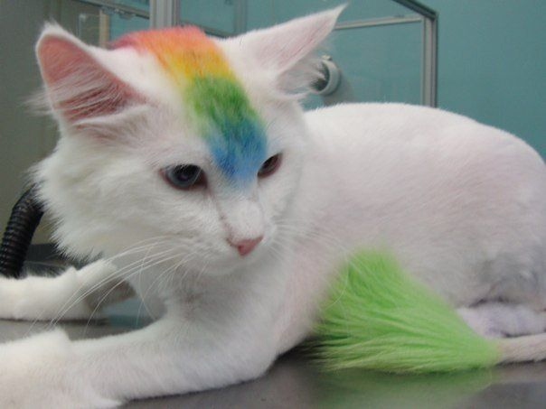 cat with mohawk - creative grooming