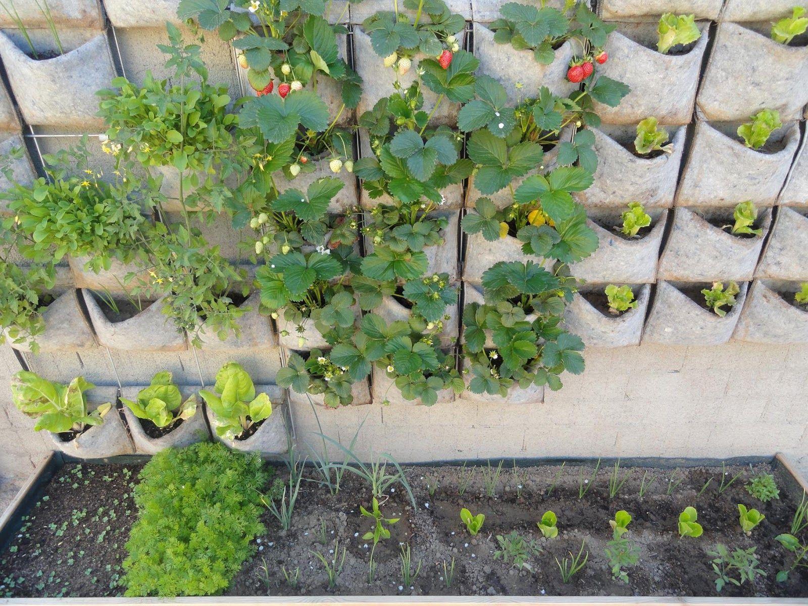 Modelo De Huerta Vertical Urban Garden Plants Garden