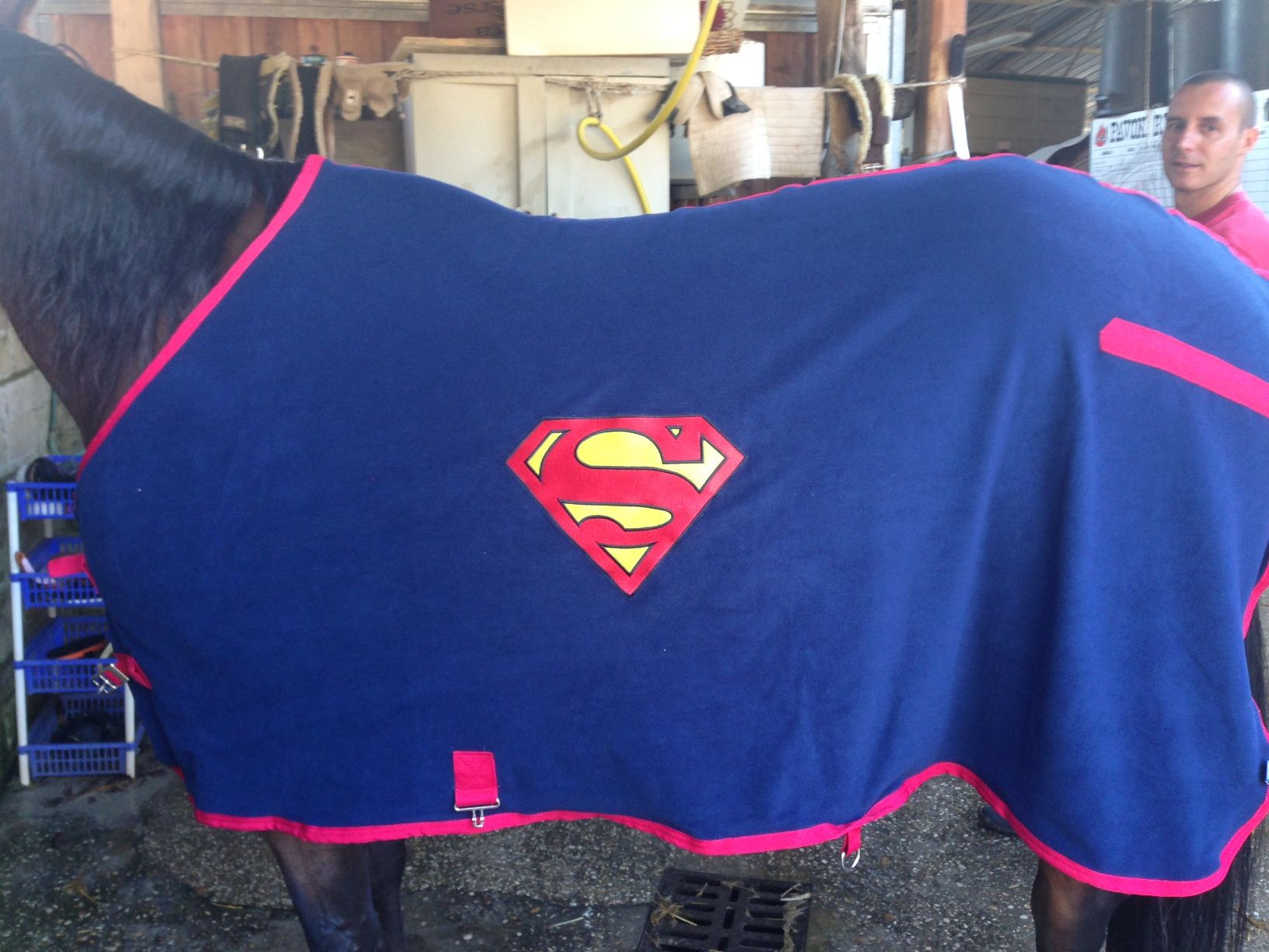 Superman Horse Rug   Sök På Google