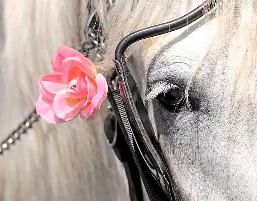 Открытка с лошадью с 8 марта