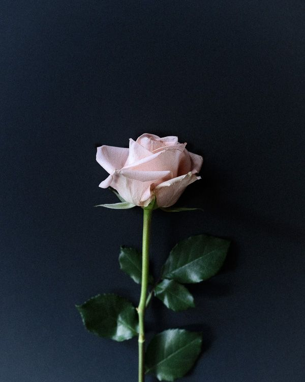 I Took This Beautiful Still Life Floral Photography As
