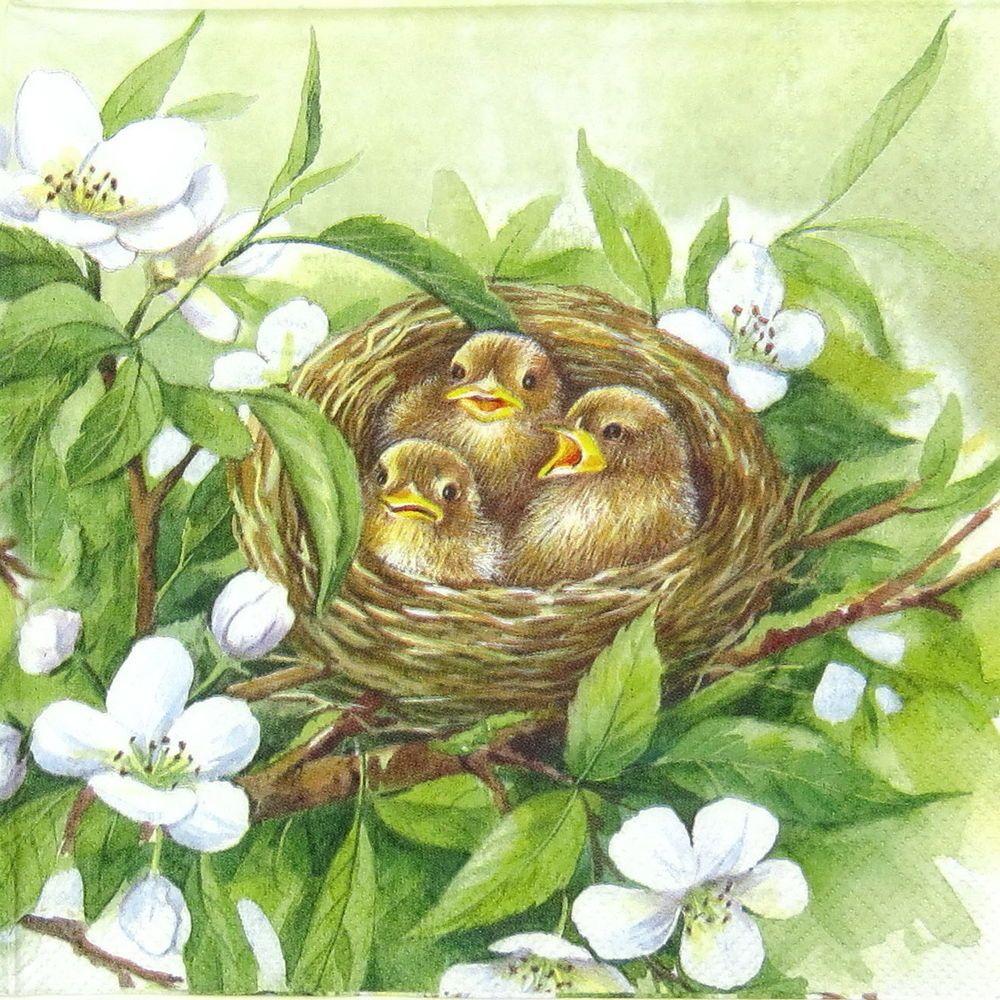 4x PAPER NAPKINS for Decoupage BIRD FAMILY BIRDS NEST FLORAL