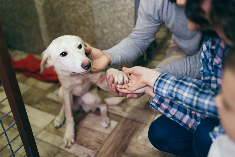 Michigan Becomes The Nation S Second No Kill Shelter State With