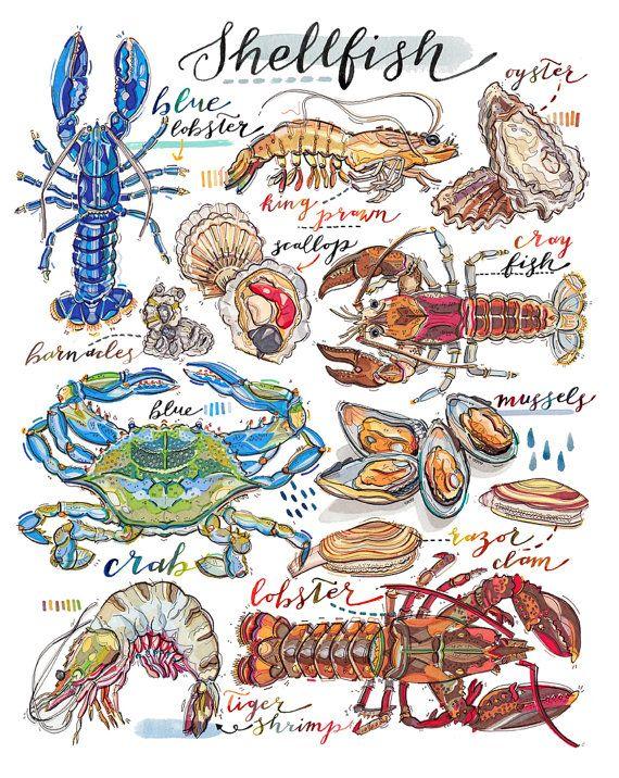 Shellfish Illustration. Seafood Print. Kitchen Decor. By LouPaper