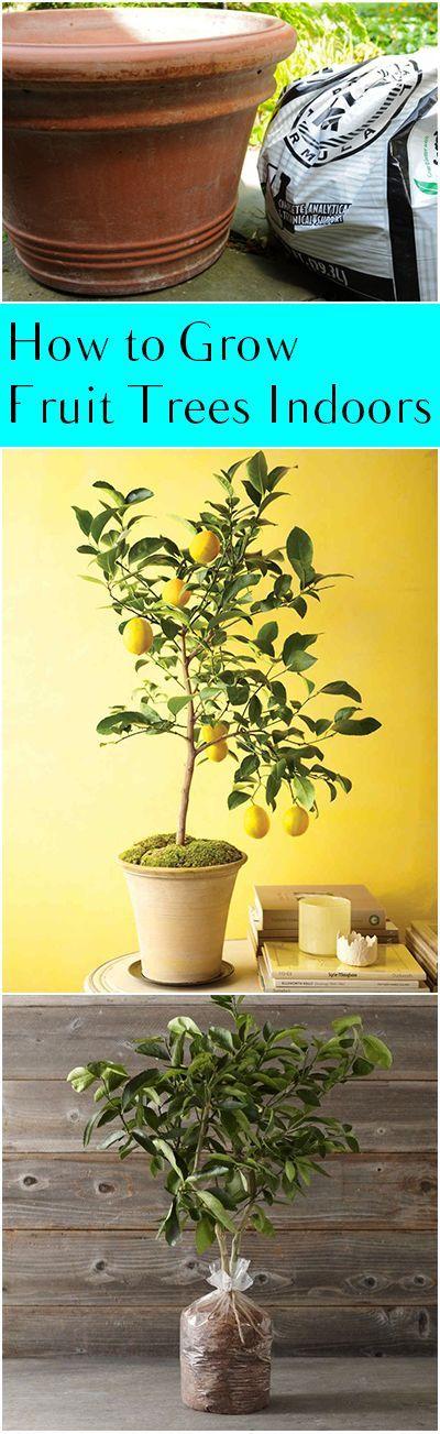 How To Grow Fruit Trees Indoors Indoor Garden Indoor 400 x 300