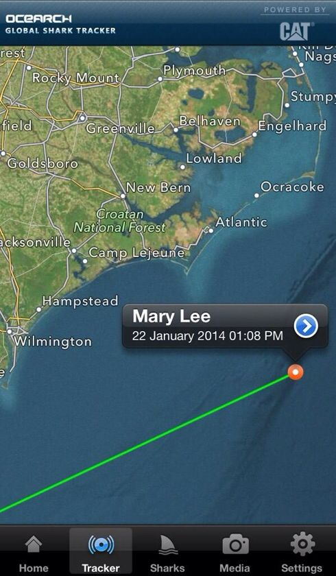 Mary Lee a 16ft 3500lb whiteshark pings east of