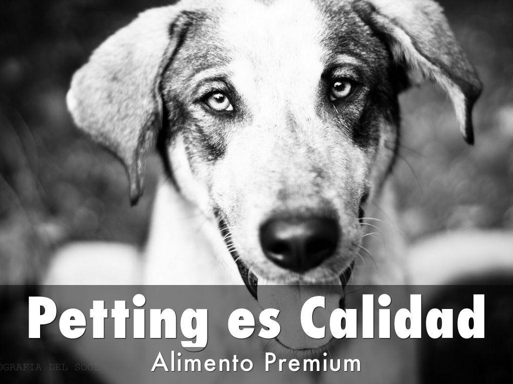 Petting es una línea de alimentos para perros y gatos con una excelente relación Precio - Calidad de Producto.