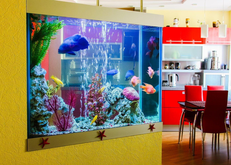 Home Aquarium Fish Youaqua Aquarium Aquariumhobby Aquariumlife