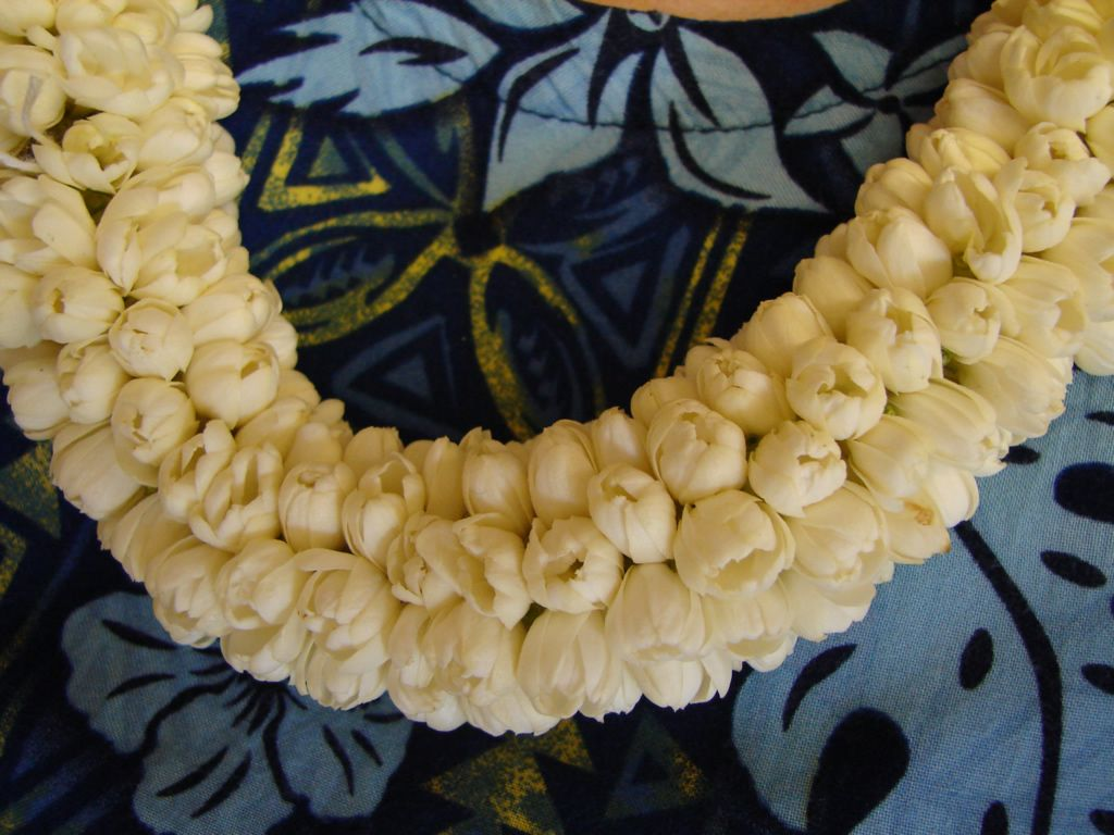 We love Our Bangladesh Jasmine Arabian jasmine flower Beli ful strong sc