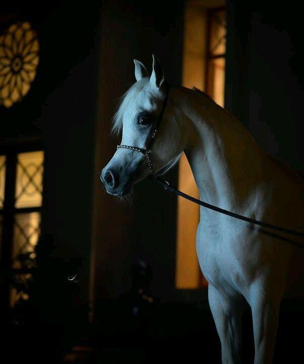 Pin On Horses 1