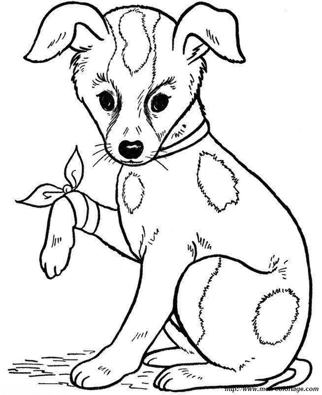 Imagen El Pobre Perro Para Colorear Dibujos Dibujos De Animales