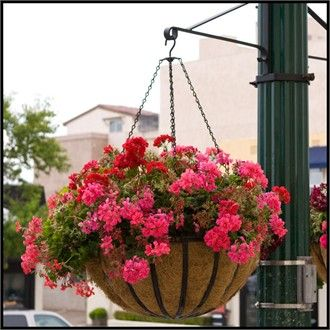 Large Steel Hanging Baskets Make Great Flower Baskets For Cities