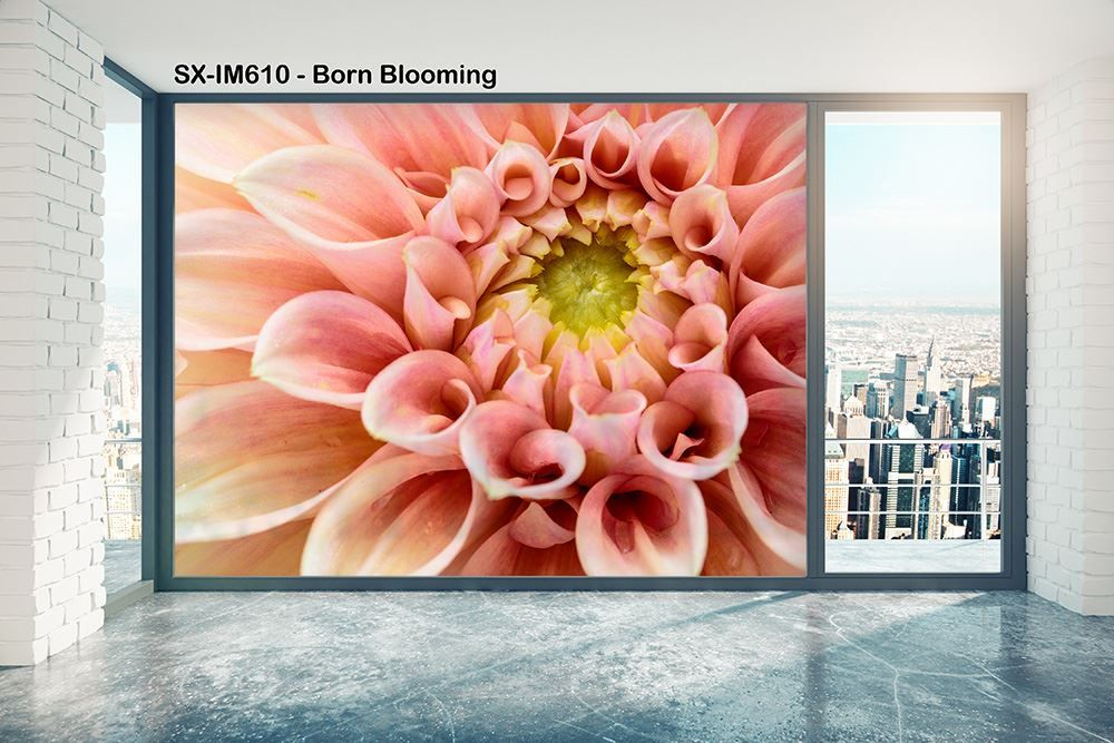 Picture of SOLYX: SX-IM610 Born Blooming
