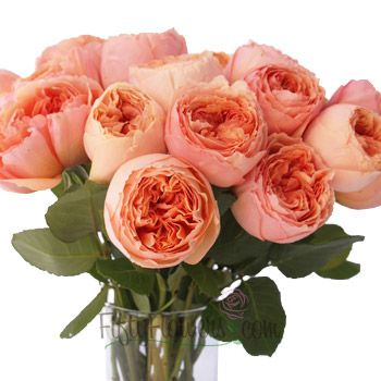 peach orange peony garden rose 350