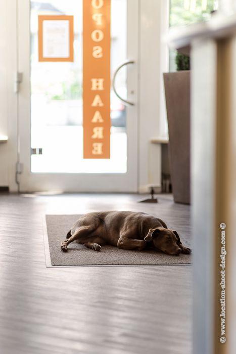 Bon Interieur, Interior, Salon, Friseursalon, Innenaufnahme, Teppich, Hund Auf  Teppich, Liegender Hund, Hund, Tresen, Tür, Ladentür, Holzfussboden,  Holzoptik, ...