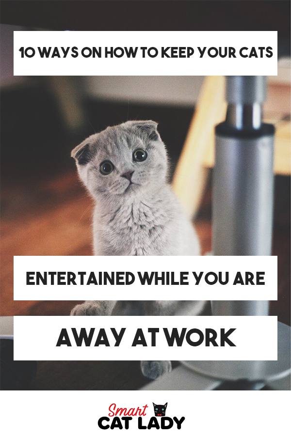 10 Ways On How To Keep Your Cats Entertained While You Are Away At Work Pet Care Cats Cat Entertainment Cat Health