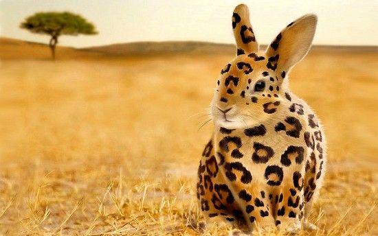 Leopard bunny. hahaha