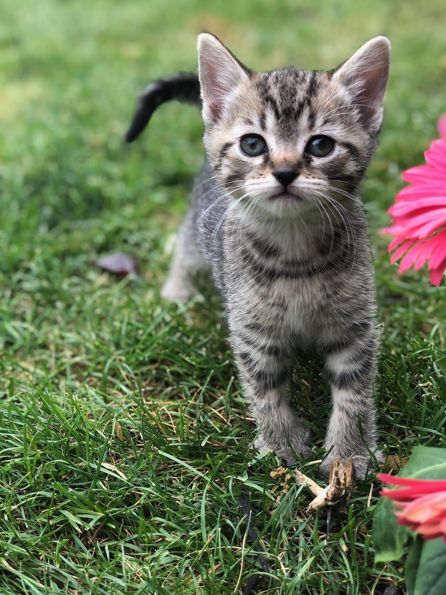 Let My Kitten Outside Today Https Ift Tt 2lhurvg Cute Puppies Cats Animals Chien Chat Chien Petit Chien