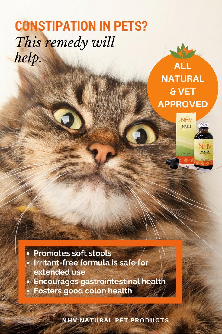 Maris For Cats Holistic Pet Care Pet Insurance Reviews Pet Health Care