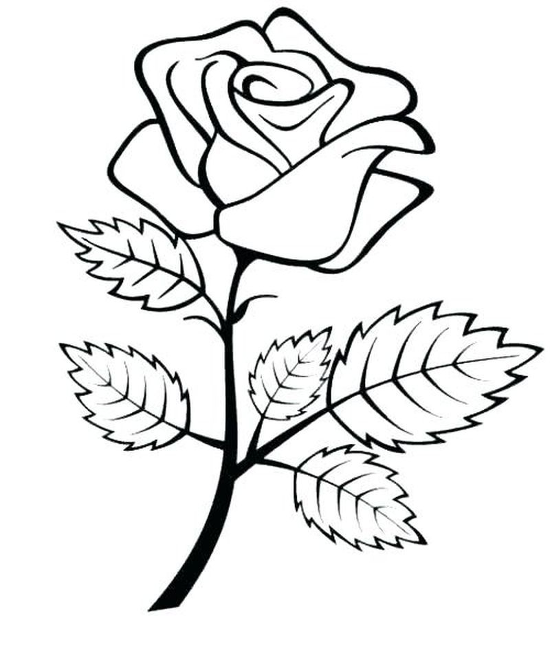 A Rose Coloring Page Rose Coloring Pages Flower Coloring Pages Flower Sketch Images