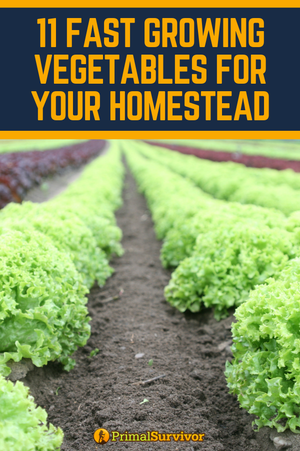 11 Fast Growing Vegetables For Your Homestead Growing 400 x 300