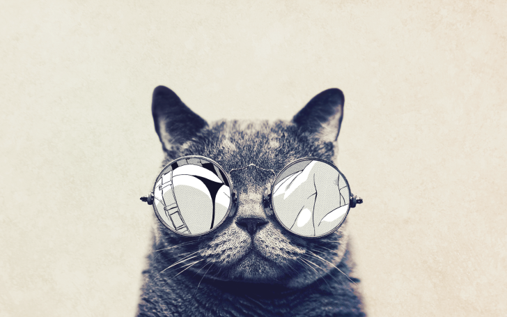 Cat With Cool Sunglasses Free Hd Wallpaper Lol Pinterest Cat
