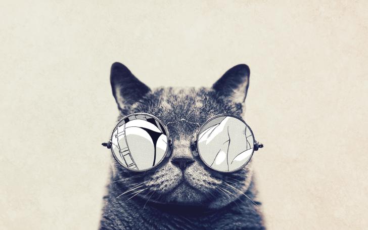 Cat with cool sunglasses HD Wallpaper HD Desktop