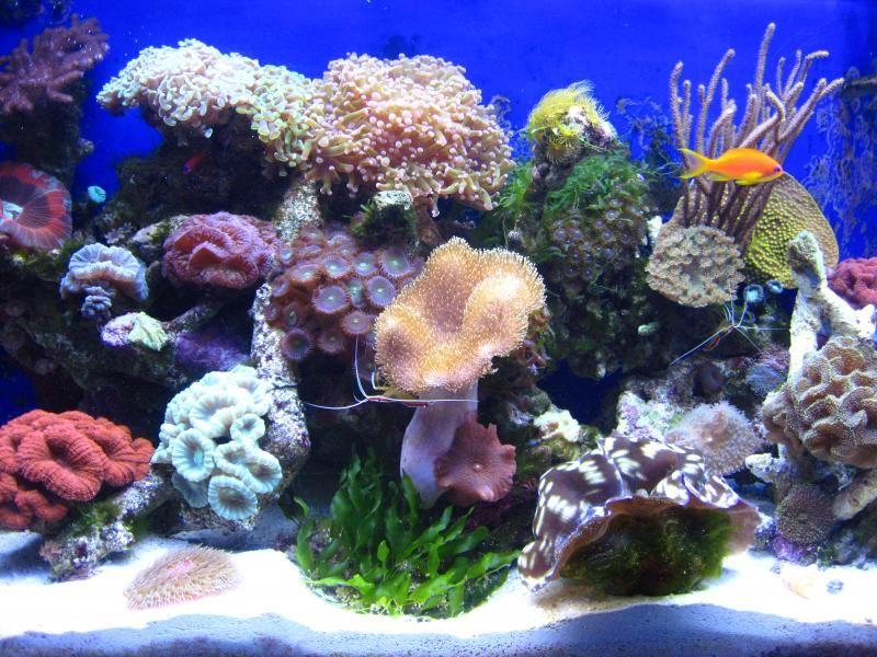 Pin By Callum Broe On Saltwater Tanks Marine Fish Tanks Saltwater Tank Saltwater Aquarium