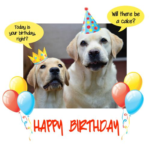 Send A Cute Query To Your #birthday Pal With A