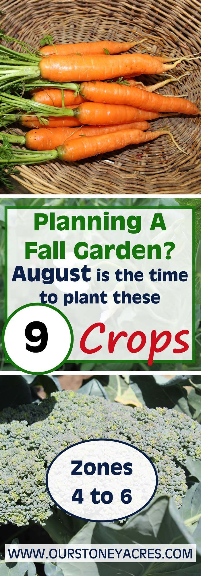 9 Crops You Can Plant In August For Fall And Winter 400 x 300