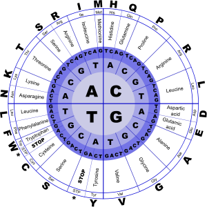 Clipart Genetic Code Amino Acids Genetics Biology