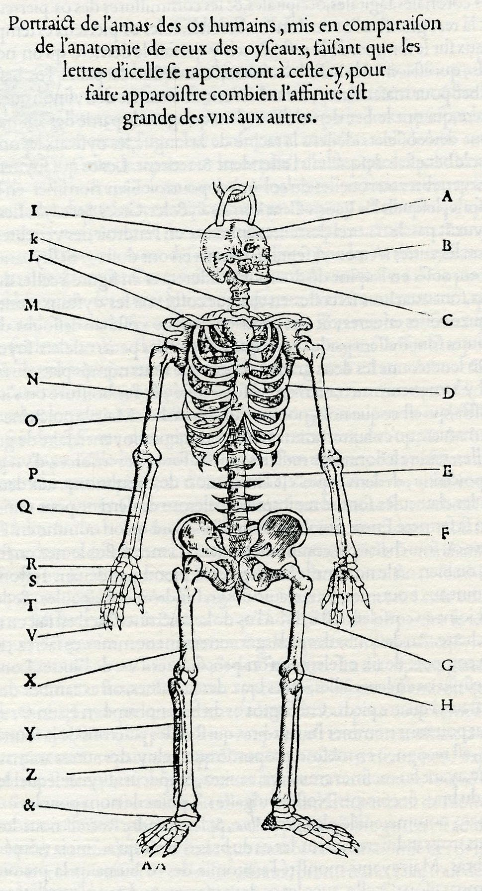 Beginning with the 16th century, anatomy was one of the tools ...