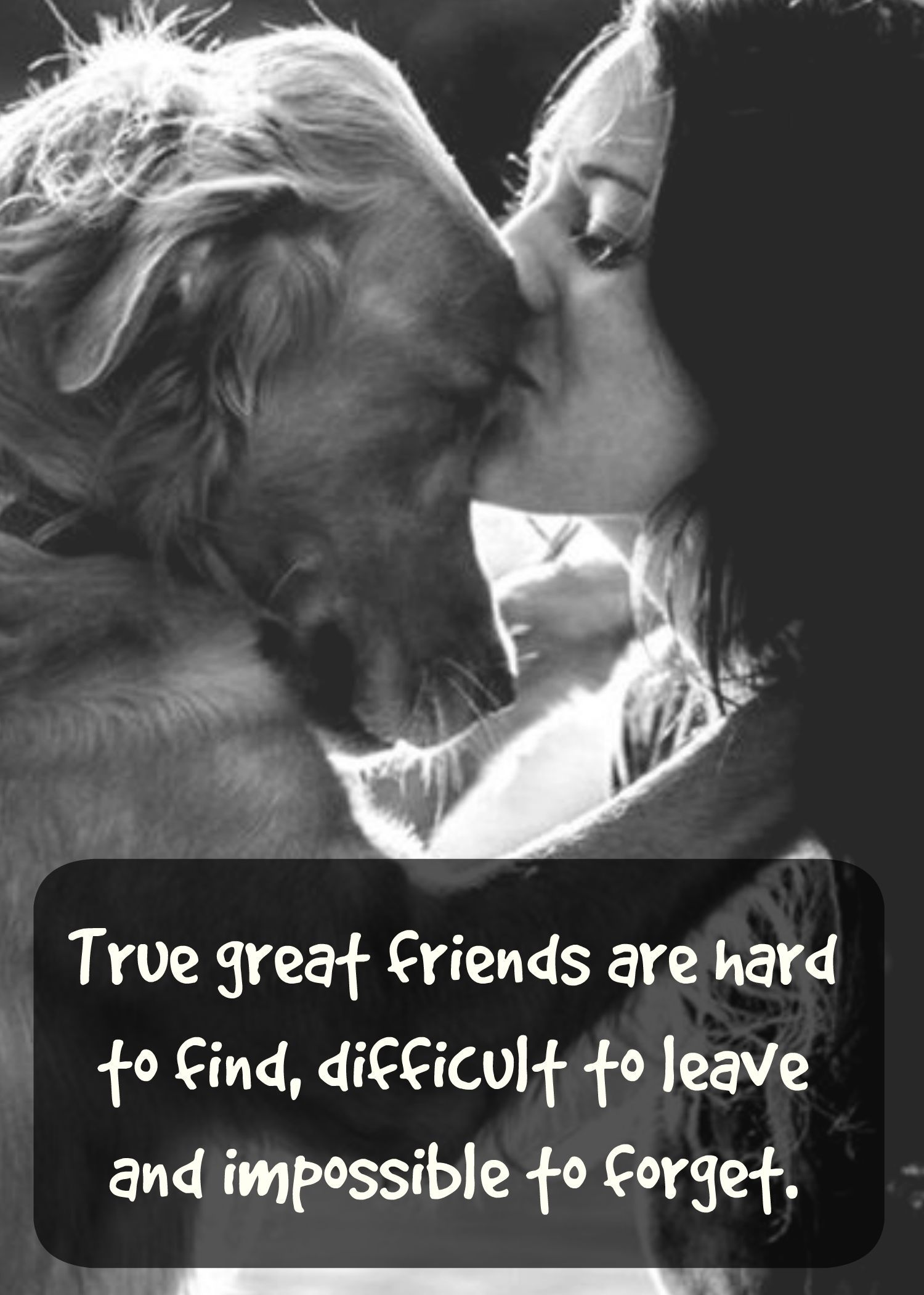 Quotes About Dog Friendship Dogs Are True Friendsquote Retriever  Www.fordogtrainers