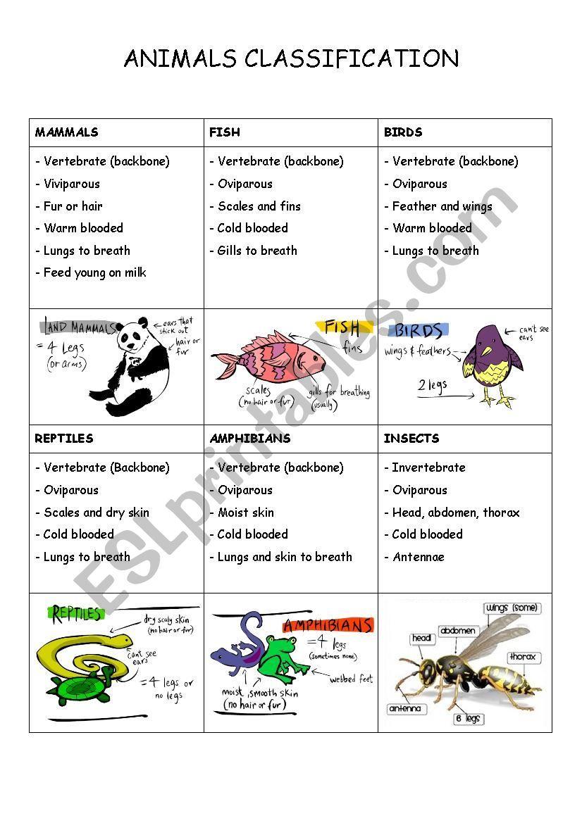 Animals classification ESL worksheet by maniosita en