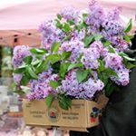 Everyone leaving the farmers market is loaded with the deliciousness of spring Can you smell the lilacs